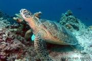 美人鱼岛一日游 - 体验水肺潜水