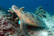 Mantanani Island Day Trip - Discover Scuba Diving